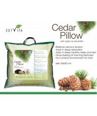 Pine nuts  pillow 60x50 cm